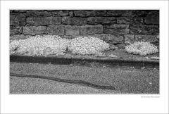 Blaukissen am Straßenrand