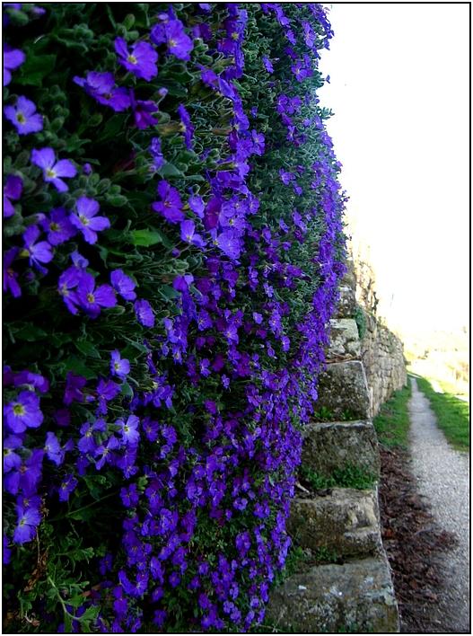 Blaukissenwege