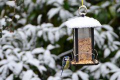 Blaumeise im Schnee von gestern DSC0439