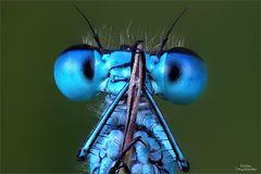 blaupfeil_eyes