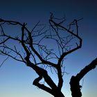 Blaus Stunde