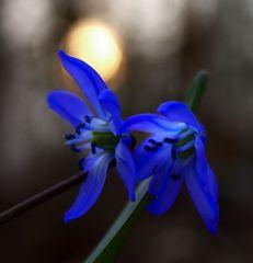 Blausternchen1