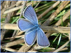 Blauviolett