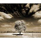 ~ blazing tree ~