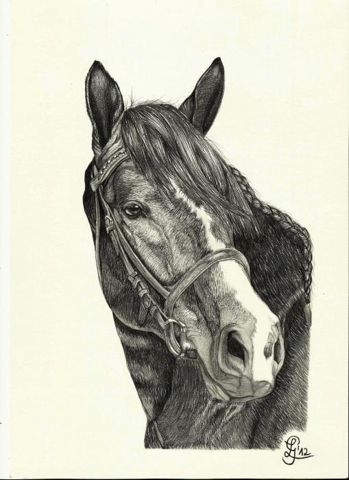 Bleistift A4 Foto Bild Tiere Haustiere Pferde Esel