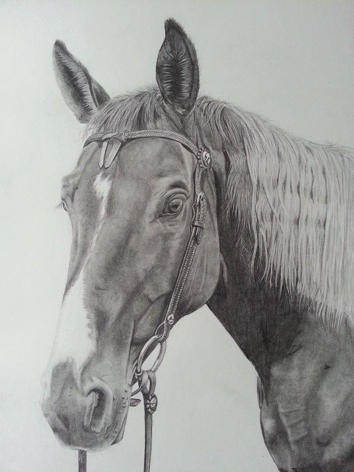 Bleistift Portrait Foto Bild Tiere Haustiere Pferde Esel