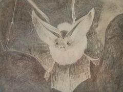 Bleistiftzeichnung Fledermaus