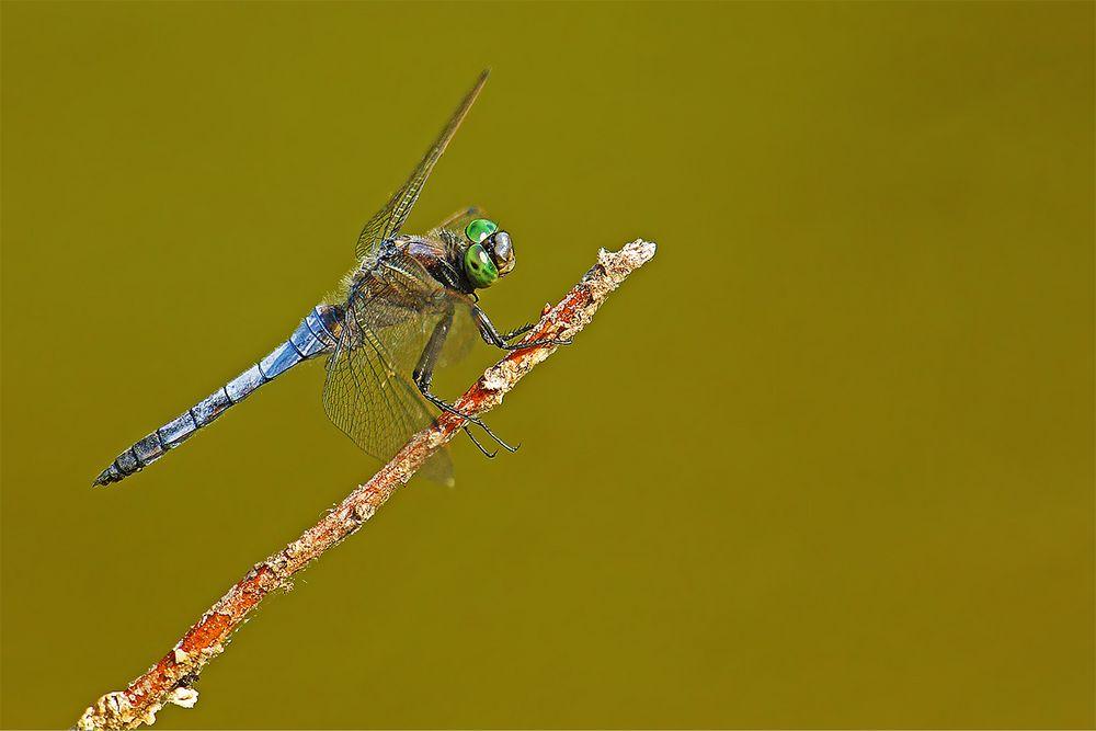 ...Bleue aux yeux verts...