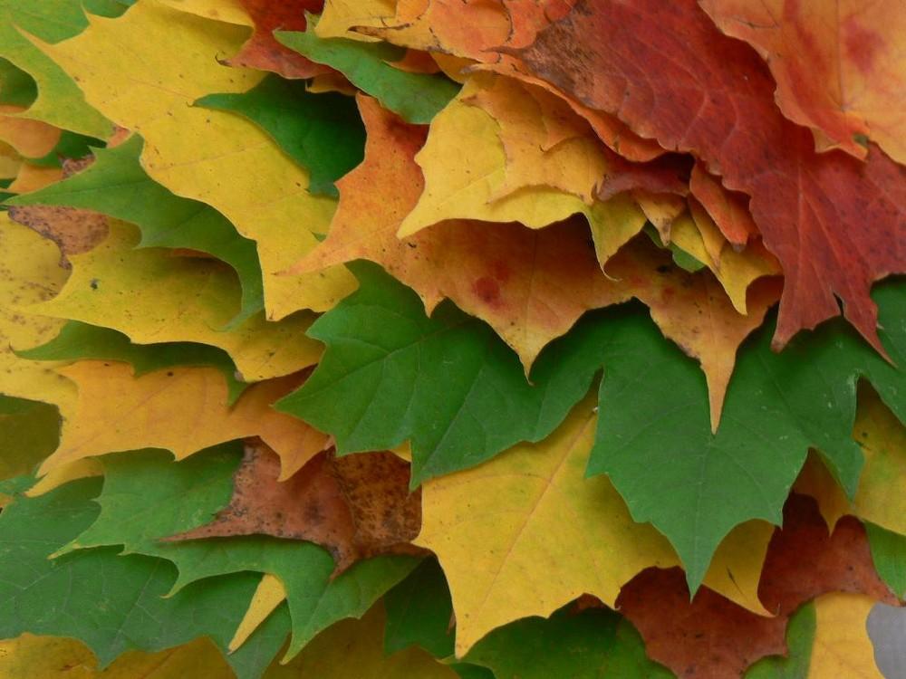 Bli~Bla~Blätter
