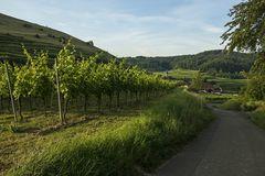 Blick auf Altvogtsburg