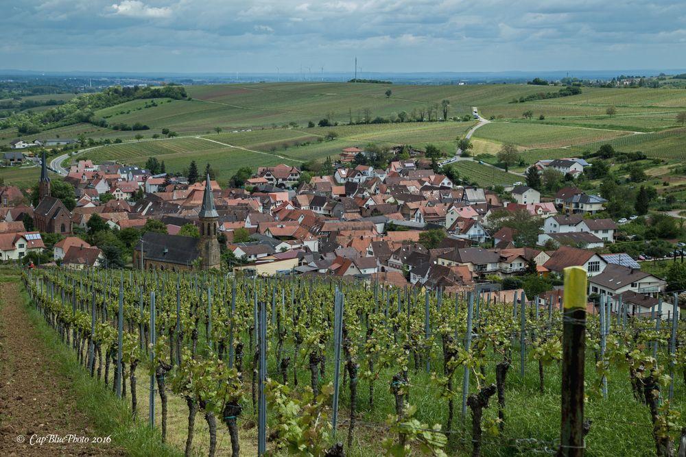 Blick auf Birkweiler in der Südlichen Weinstrasse