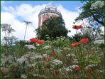 Blick auf den Elisenturm im Botanischen Garten Wuppertal