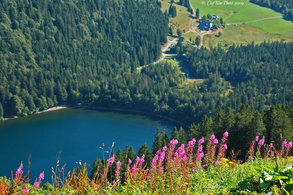 Blick auf den Feldsee vom Feldberg