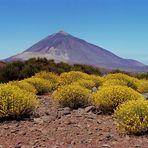 Blick auf den Teide 1