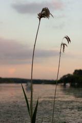 Blick auf denn Templiner See