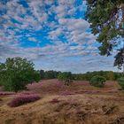 Blick auf die Heide