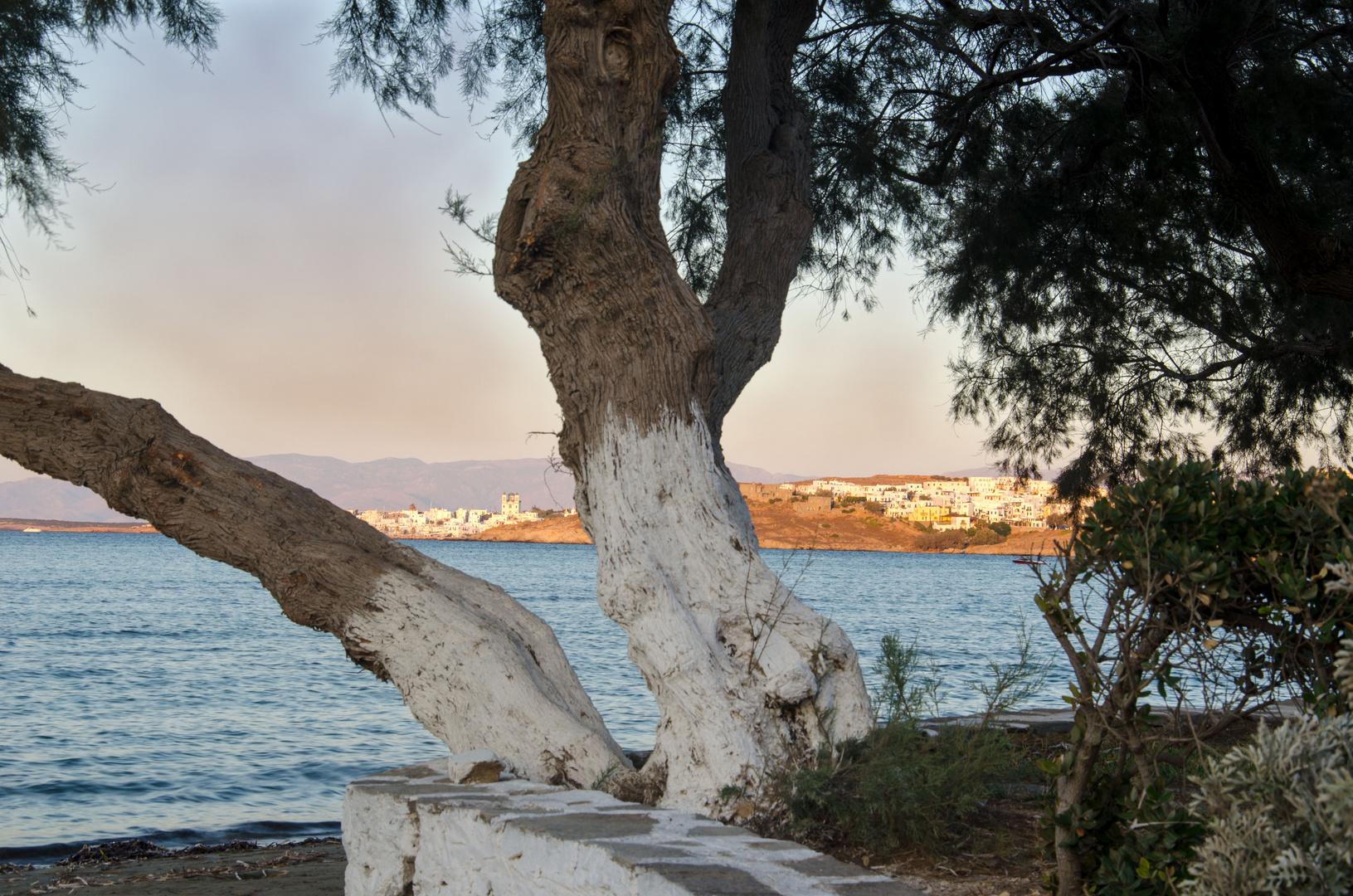 Blick auf Naoussa auf Paros in Griechenland