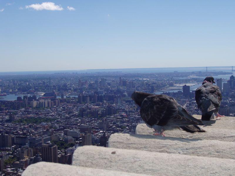 Blick auf NY