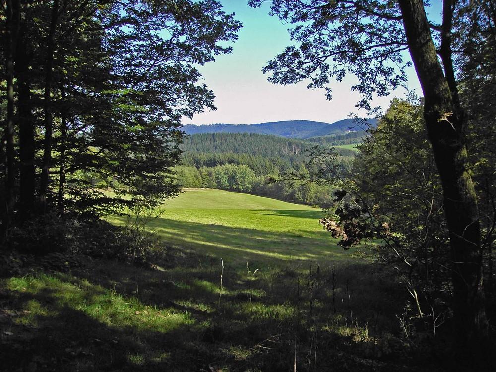 Blick aus dem Wald in die Ferne