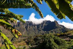 Blick durch den Bananenbaum