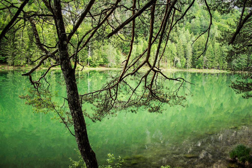 Blick durch die Bäume