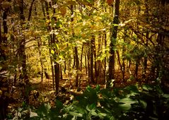 Blick durchs Unterholz