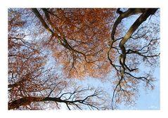 Blick in den Herbst-Baum-Himmel...
