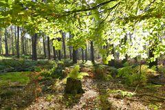 Blick in den herbstlichen Wald ...