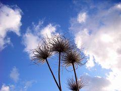 Blick in den Himmel...
