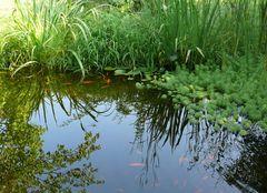 Blick in den Teich / Einfach beruhigend