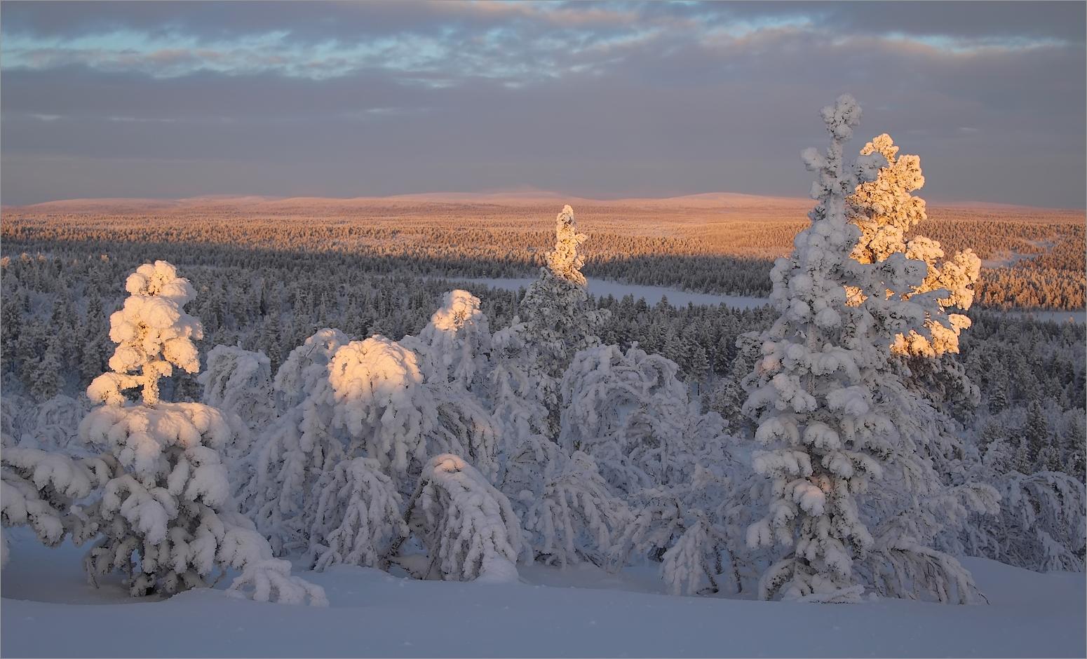 Blick in die Tundra