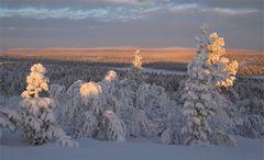 Lapland Winter 2019