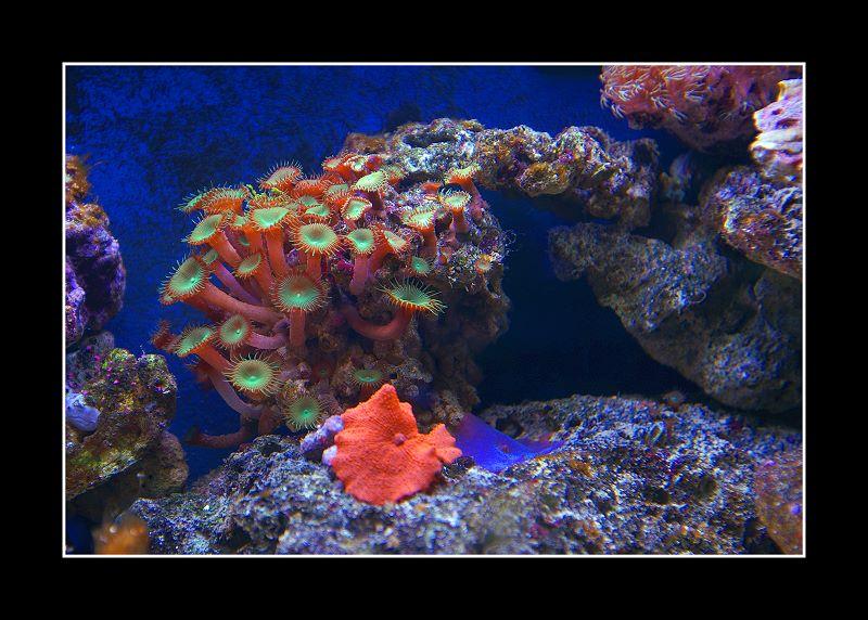 Blick in ein kleines Meerwasser-Aquarium