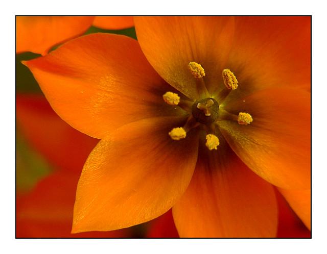 Blick in eine Blüte...( für H1 )