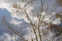 Blick in Teich und Himmel zugleich