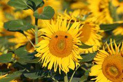 Blumen u. Pflanzen