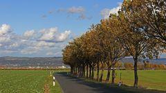 Blick nach Norden ins Elbtal bei Dresden mit der Allee von Babisnau...
