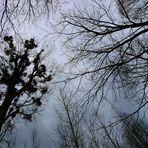 Blick nach oben, Looking Up, mirada hacia arriba