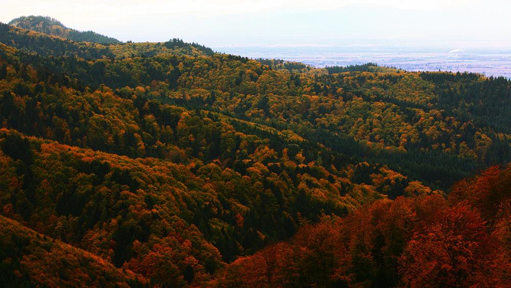 Blick über den Herbstwald