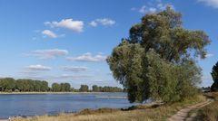 Blick über den Rhein nach Leverkusen-Hitdorf (2)