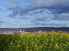Blick übers Rapsfeld