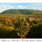 Blick vom Metzinger Weinberg auf die Schwäbische Alb