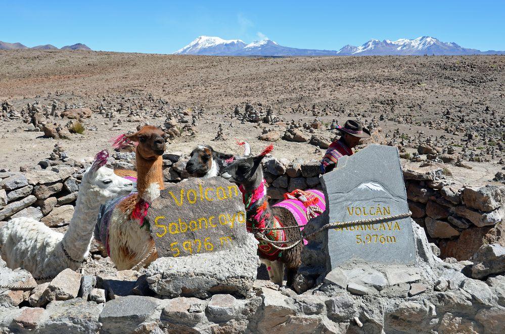 Blick vom Patapampa-Pass (4900m) zum Sabancaya (5976m)