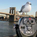Blick vom South Street Seaport zur Brooklyn Bridge