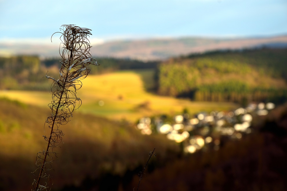 Blick vom Treisberg