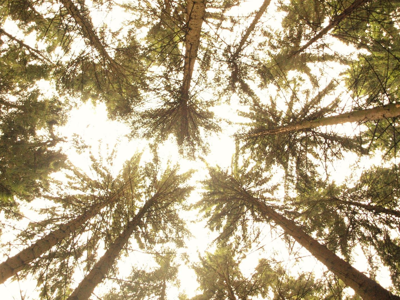 Blick vom Waldboden !