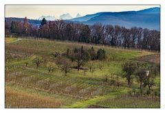 Blick von Ötlingen aus in die Schweiz