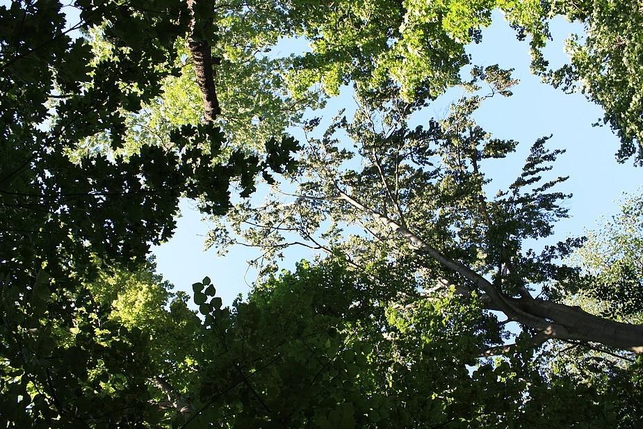 Blick zum Himmel aus dem Drackendorfer Park