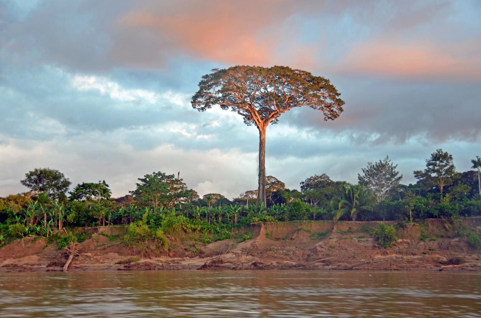 Blick zum Ufer des Rio Tambopata im Südwesten Perus