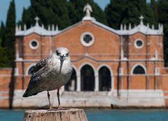 Blick zur Isola San Michele